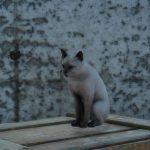 サブクエスト『腹ぺこ猫のご飯』攻略【FF15】